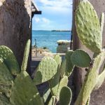 Cactus Marzamemi