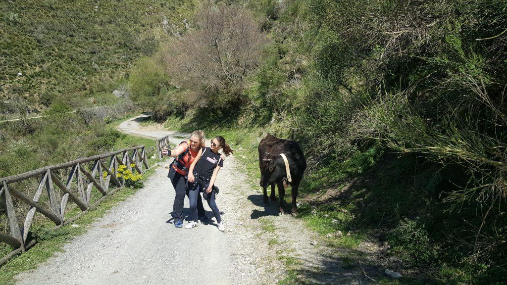 Koeien op wandelpad naar waterval Catafurco