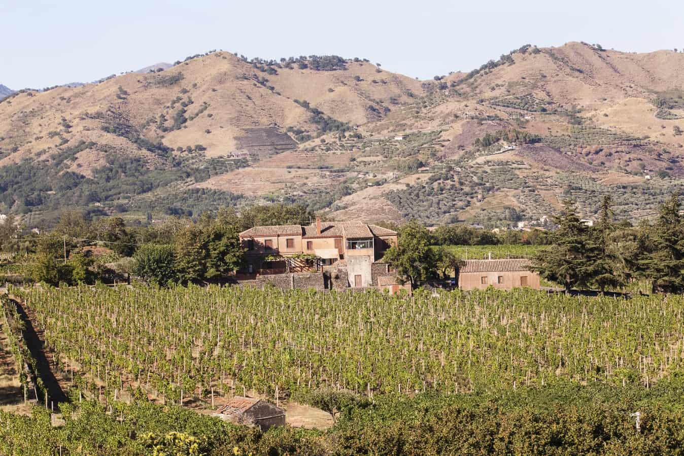 Wijngaard Etna wijn